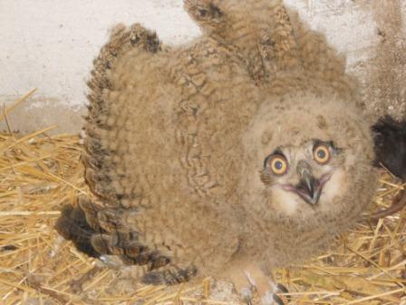 Филенок в зоопарке, Одесса